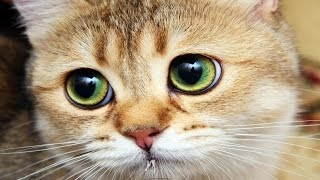 Funny Cats Compilation (Part 1) Funny Cat Videos Ever