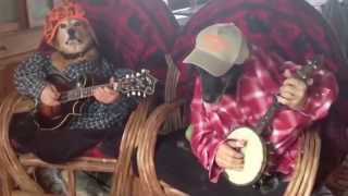 Cute Dogs Play Banjos