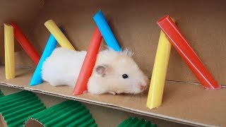 My Funny Pet Hamster Boat Maze – Three Cute Hamsters 🐹🐹🐹!