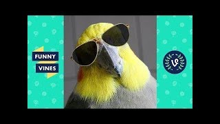 Funny BIRDS & PARROTS Compilation 2019