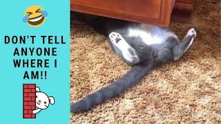 Funny Cats Hiding Playing In Chest of Drawers