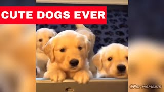 Cute Dogs Compilation (2019) #1 | Best of Funny Dog Video Ever