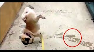Cute Dogs Doing Weird and Funny Things!!