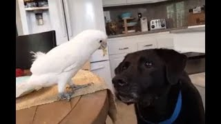 Funny Parrot Annoying Dog