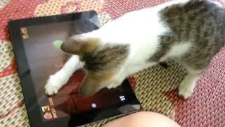 Most Funny Cats And Dogs Playing Fruit Ninja Compilation 2014