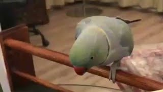 Amazing funny birds toking moment video