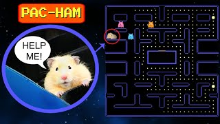 Cute Hamsters Play Pac-Man | Hamster Challenge | Hamster Fun!