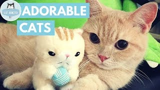Cute Cats Video Compilation