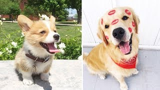 ♥Cute Puppies Doing Funny Things 2019♥ #20  Cutest Dogs