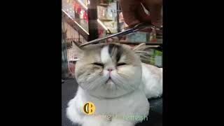 Funny cute cats/funny cats playing