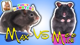 FUNNY HAMSTERS 2-level Maze for Hamsters. Who is the BEST