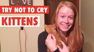 People Get Surprised With Kittens | Try Not To Cry