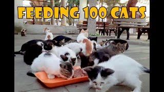 Feeding 100 Stray Cats 2 – Turkey's Cat Island (Cute Cats – Cute Kittens)
