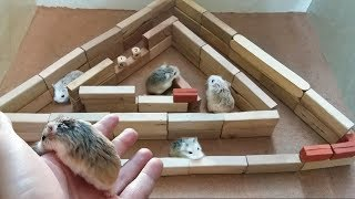 My Funny Pet Hamsters in 2-Level Pyramid Maze   POP Pets 🐹