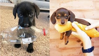 ♥Cute Puppies Doing Funny Things 2019♥ #12  Cutest Dogs