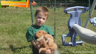 Viral Moments Funny Dogs and Babies are Best Friends #2   Baby and Dog Playing Together Everyday