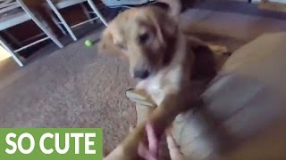 Puppy gives best reaction ever to new dog bed