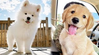 ♥Cute Puppies Doing Funny Things 2019♥ #11  Cutest Dogs