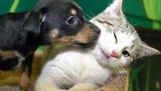 Kittens Meet Puppies For The First Time Try Not to Laugh! – Cats Meeting Dogs, Funny Kitty Cats