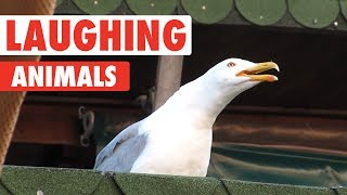 Laughing Animals Compilation