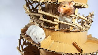 Our Pet Hamsters Running In Big Tower Maze