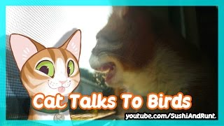 Cute Cat Talks to Birds Outside of the Window – Cat Mumbles / Chatters