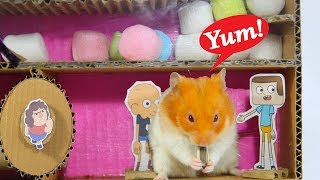 Two Hamsters Finding Sumo, Jeff, Belson And A Mystery Character In Clarence Maze