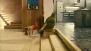 Funny bird commercial