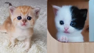 💗Aww – Funny and Cute Cats Compilation 💗 #6 – CuteVN 3