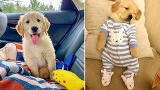 ♥Cute Puppies Doing Funny Things 2019♥ #19  Cutest Dogs