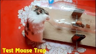 Funny Hamster/What Hamsters Do When Meet Mouse Trap? /Hamster Test Mousetrap/Funniest Hamster