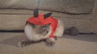 Cute Cats Play Trick or Treat!