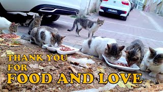 Stray cats say, thank you for food and love (Cute Cats – Cute Kittens)