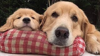 Cute Dogs And Puppies Doing Funny Things – Cutest Puppies In The World 2019 | Funny Dog | Puppies TV