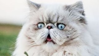 Best Funny Cats Fails Compilation Part 2   Funny Cat Videos 2015 – Funny Pets, Funny Animals