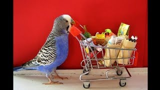 Funny Parrots Videos Compilation cute moment of the animals – Cute Parrots #19