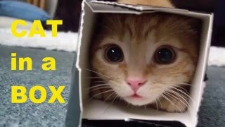 Funny Cat Videos   Cat in a box   Funny Cats Compilation 2015