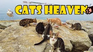 Feeding Stray Cats With Wet Cat Food on the Rocks (Cute Cats – Cute Kittens)