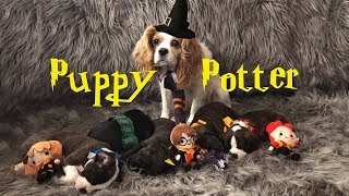 Puppy Potter | Puppies get sorted into Hogwarts
