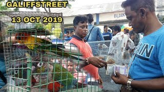 ALL BIRDS PRICE AT GALIFFSTREET BIRDS AND PET MARKET KOLKATA WEST BENGAL INDIA HD