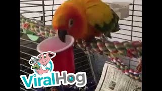 Funny Bird Plays with Cup || ViralHog