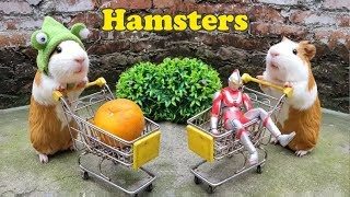 Funny Hamsters – Go Shopping | 🐹
