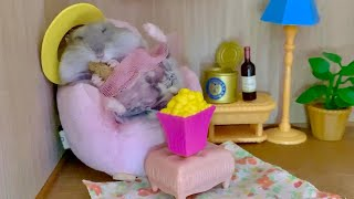 Cute funny #hamster couch potato (2019 #animal #pet video)