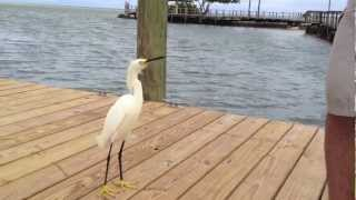 Kent Feeds A Cute Little Bird In Islamorada, Florida
