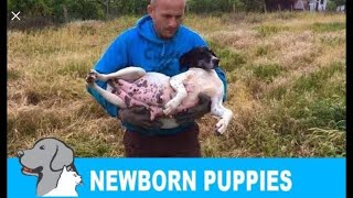 Rescued a homeless pregnant dog + newborn 8 puppies. Please share so we can find them new home!