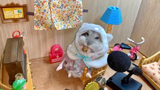 Cute Hamster mukbang asmr… (Funny #hamster video 2019)