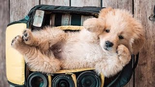 Ultimate Funny Dogs And Cute Puppies 2019 – Cutest Puppies In The World |Try Not To Laugh Funny Dogs