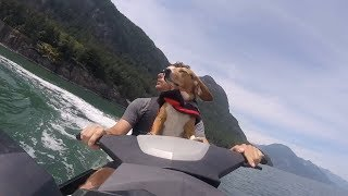 Dogs Are Awesome – Funny And Cute Dogs Compilation 2019