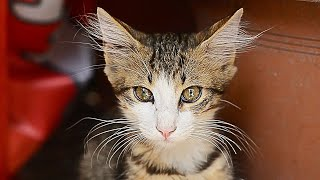 Cute Kittens and Cute Cats – NEW CAT FOOD