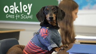 Ep 10: OAKLEY GOES TO SCHOOL – Cute Dog Video School Day
